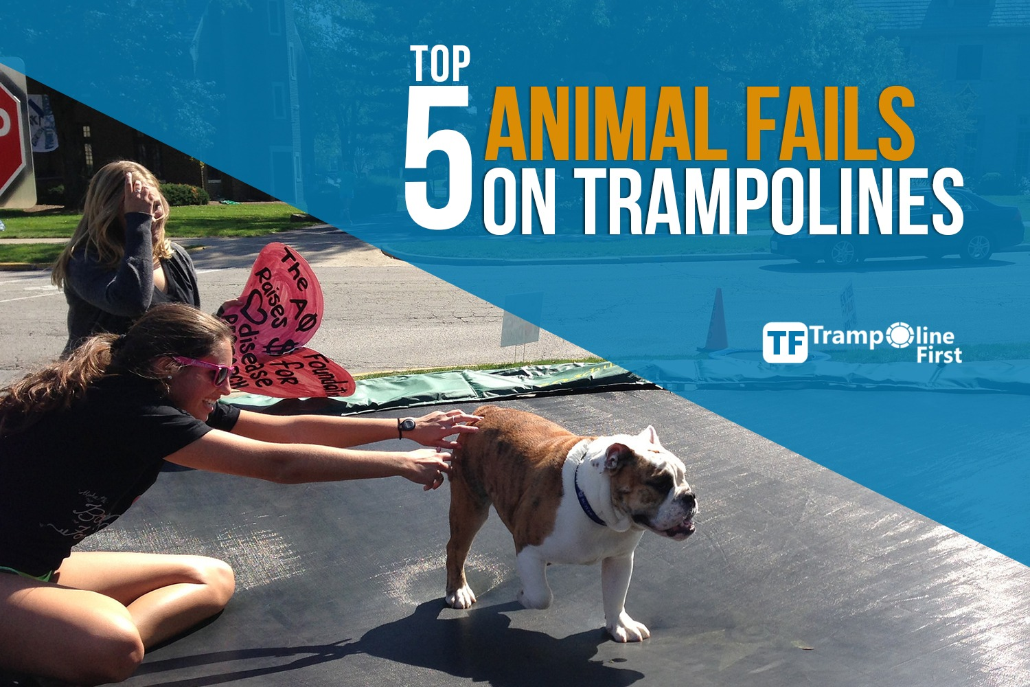 Top 5 Animal Fails on Trampolines