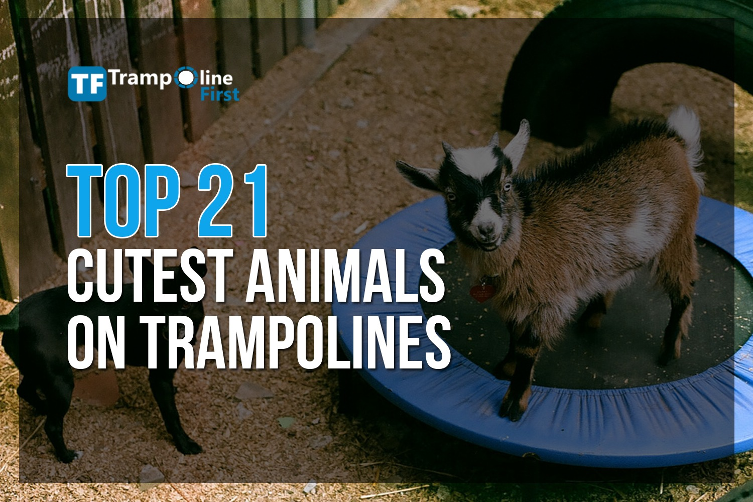 trampoline - cutest animals
